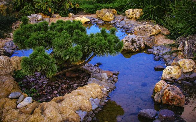Biotop im garten anlegen umfassende tipps f r das natur for Garten fische