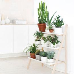 Zimmerpflanzen sch ne arten f r jeden standort und for Ausgefallene zimmerpflanzen