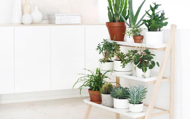 Pflanzen dekoration innenarchitekturkhles pflanzen deko for Pflanzen deko wand