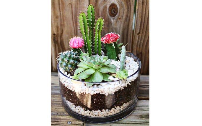 Sukkulenten als Zimmerpflanze Die schönsten Deko und Pflegetipps ~ 01004223_Sukkulenten Als Zimmerpflanze