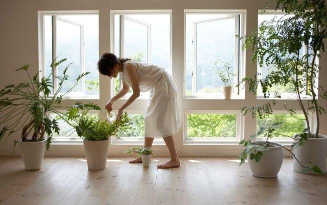 Zimmerpflanzen sch ne arten f r jeden standort und for Design zimmerpflanzen