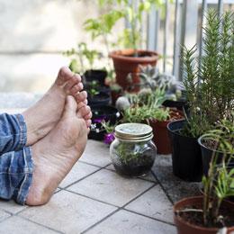 zimmerpflanzen sch ne arten f r jeden standort und pflege anspruch. Black Bedroom Furniture Sets. Home Design Ideas