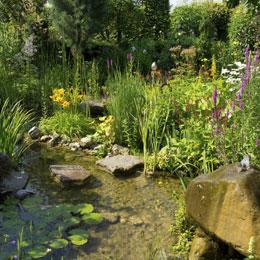 Ein Biotop Im Garten Anlegen
