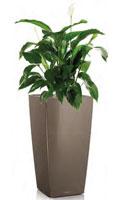 Zimmerpflanzen Die Direkte Sonne Vertragen zimmerpflanzen schöne arten für jeden standort und pflege anspruch