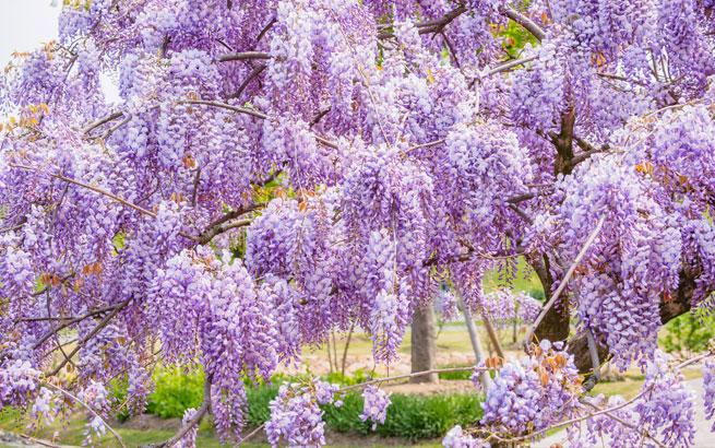 mediterrane pflanzen für den garten: die schönsten exoten, Best garten ideen