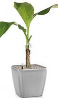 Zimmerpflanzen Für Sonnige Standorte zimmerpflanzen schöne arten für jeden standort und pflege anspruch