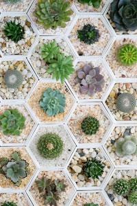 Sukkulenten Als Zimmerpflanze Die Schonsten Deko Und Pflegetipps