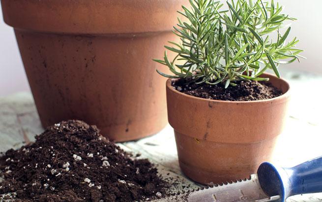 pflanzen in der kuche tipps rund pflege, rosmarin-pflege: das sollten sie beachten, Design ideen