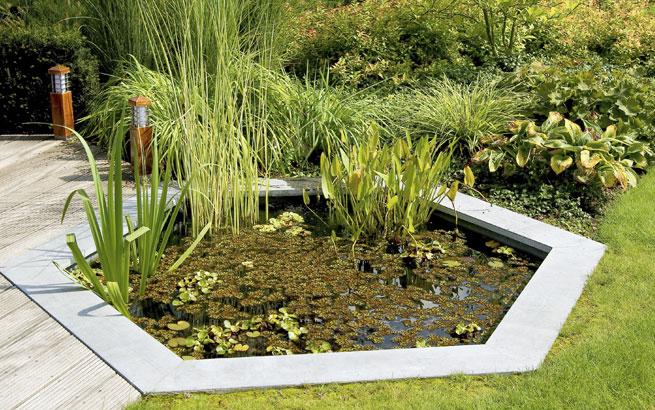biotop im garten anlegen umfassende tipps f r das natur gew sser. Black Bedroom Furniture Sets. Home Design Ideas