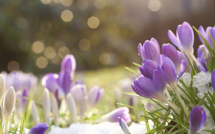 Fruhlingsblumen Bringen Die Ersten Farbtupfer In Den Garten