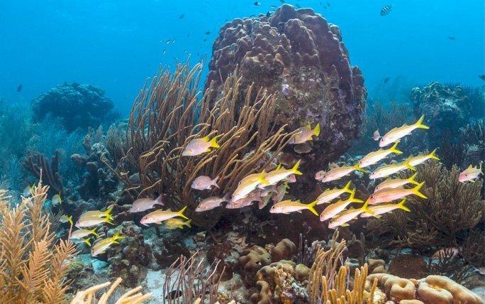 Die Unterwasserwelt von Bonaire