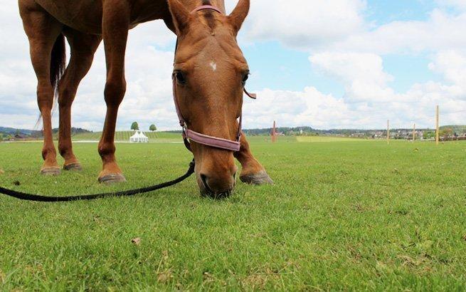 Grüne Turnierplätze, muskulöse Pferde und wagemutige Reiter – Der Polo Sport fasziniert Pferdeliebhaber weltweit und ist nun auch in Zürich zu Hause.