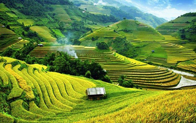 Reisfelder In Mu Cang Chai Vietnam