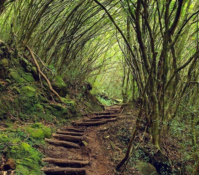 Die Natur beim Wandern entdecken