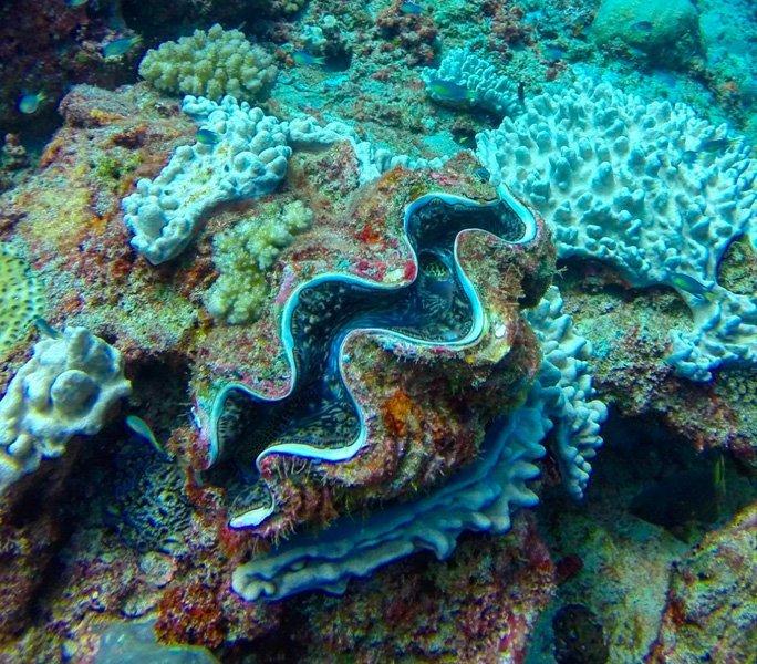 Kunterbunte Korallenwelt